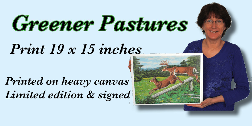 very cool White Tailed deer prints Numbered and signed very cool prints wildlife Tall Ships Military Kandahar Prints